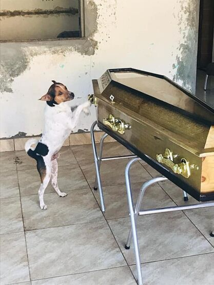 O cachorro demostrou toda a sua tristeza