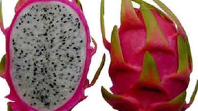 Cara Menanam Buah Naga [Dragon Fruit]