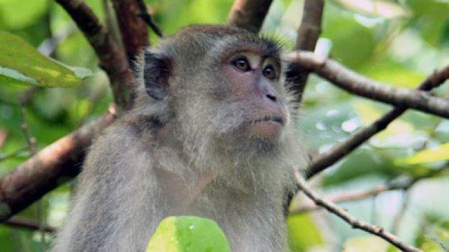 Aktivitas Gunung Kelud Naik, Hewan Mulai Keluar Hutan
