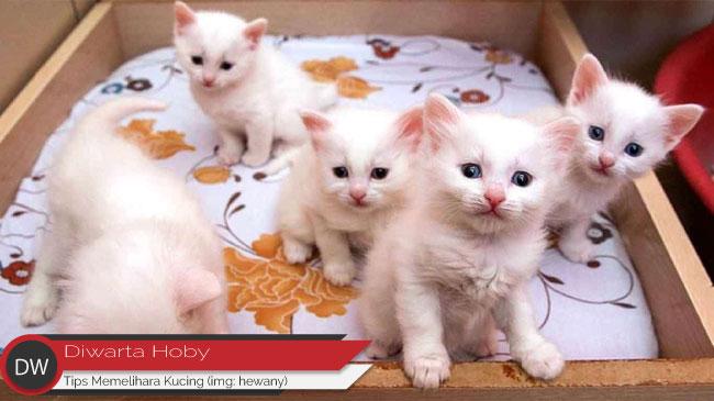 6 Tips Dasar Dalam Merawat Kucing