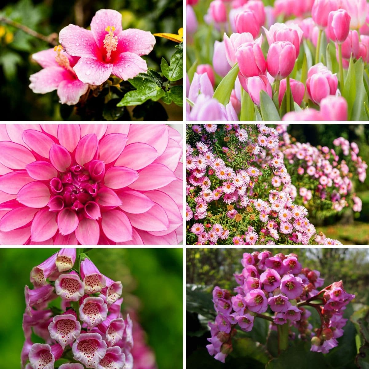 32 Gorgeous Pink Perennial Flowers That Will Bloom Forever