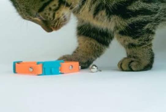evcil hayvanlar - kedi tasması