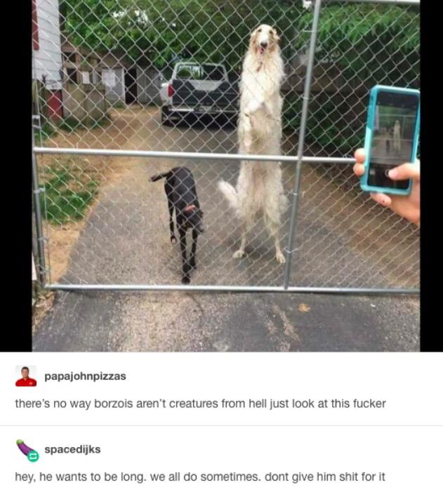 damn dog