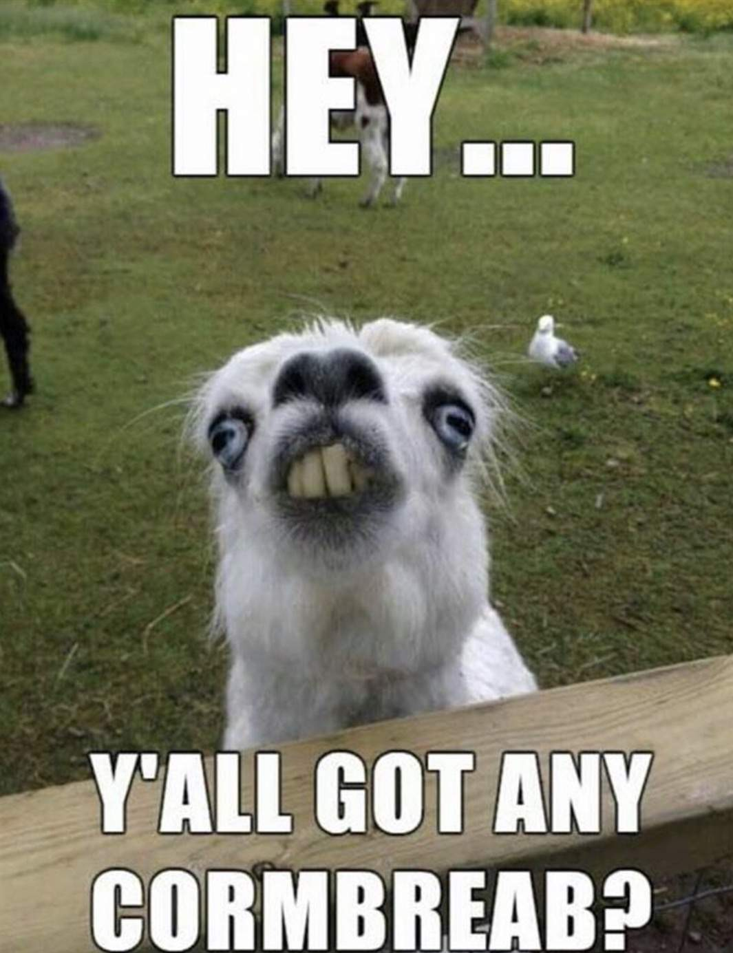 Image of: Gif 14 Funny Animal Yall Got Any Cornbreab Ebaums World Needs More Algorithm Funny Pictures According To Google Search