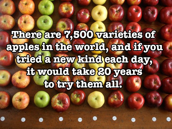 Food Facts and Hacks #5: Apples by Being A Wordsmith