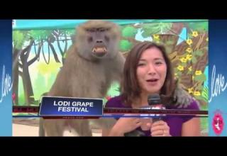 Image of: Try Not Next Video Funniest Laughing News Bloopers Ebaums World Funny Videos 2017 Try Not To Laugh Challenge Wtf Video Ebaums World