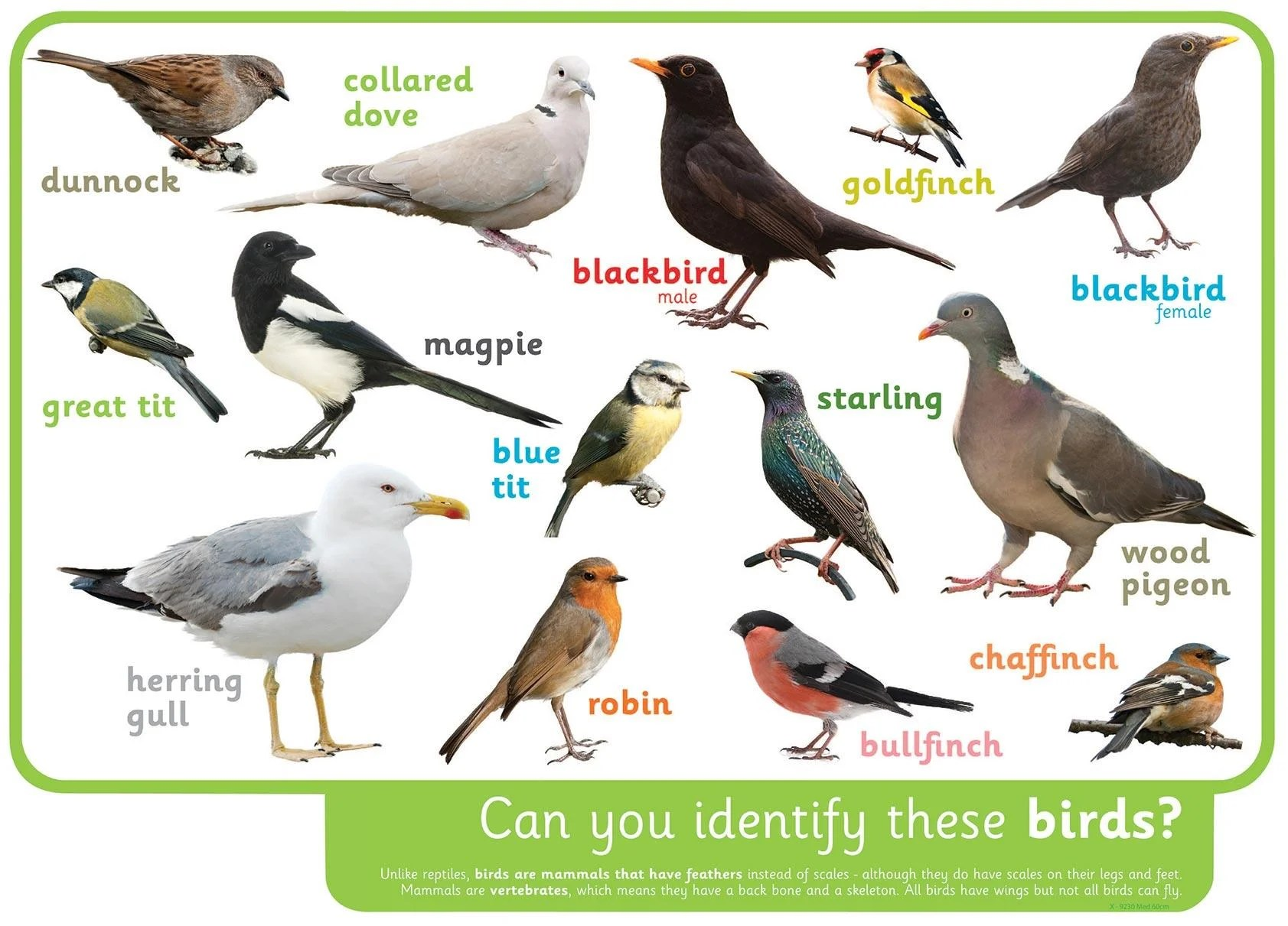 Can You Identify These Birds