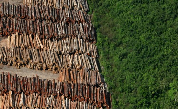Image result for desmatamento