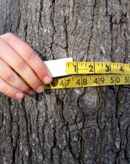 Third Grade Math Activities: How Old is That Tree?