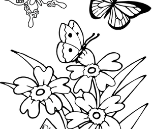 Butterfly Worksheet Education Com