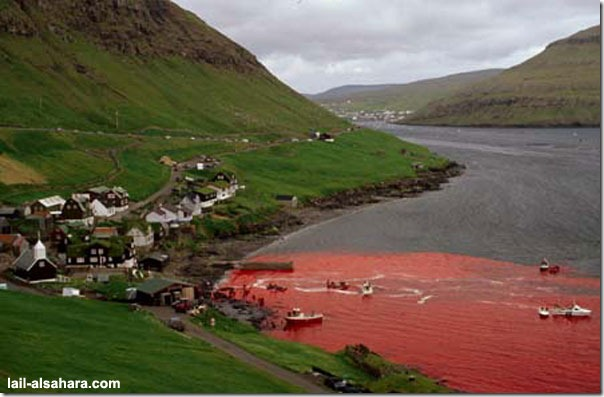 Picture 1: The sea is stained in red and in the mean while it's not because of the climate effects of nature.