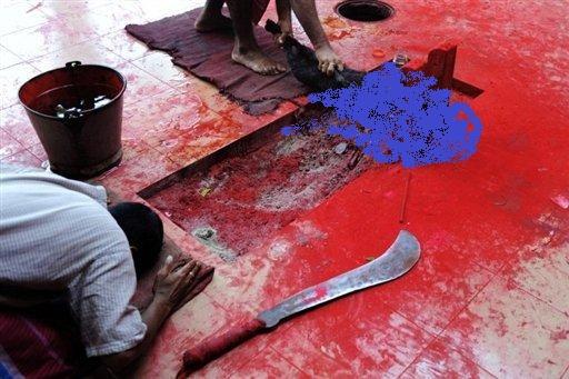 gadhimai-bara-mass-animal-slaughter