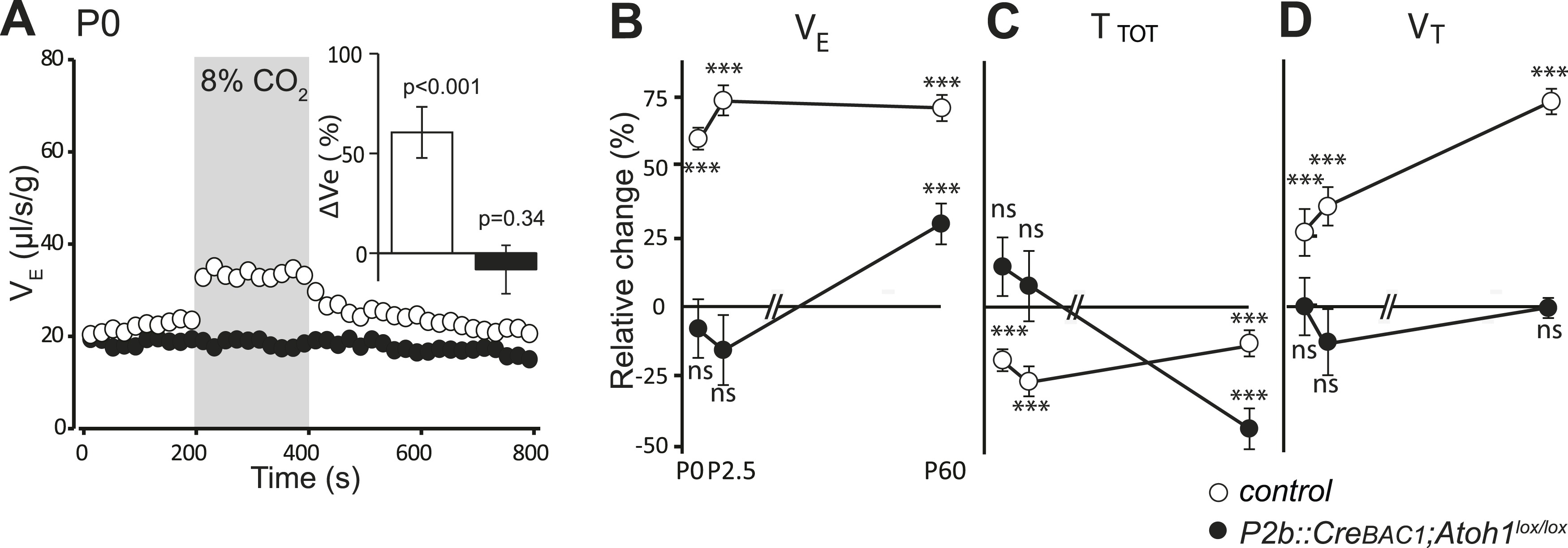 The Retrot Zoid Nucleus Neurons Expressing Atoh1 And