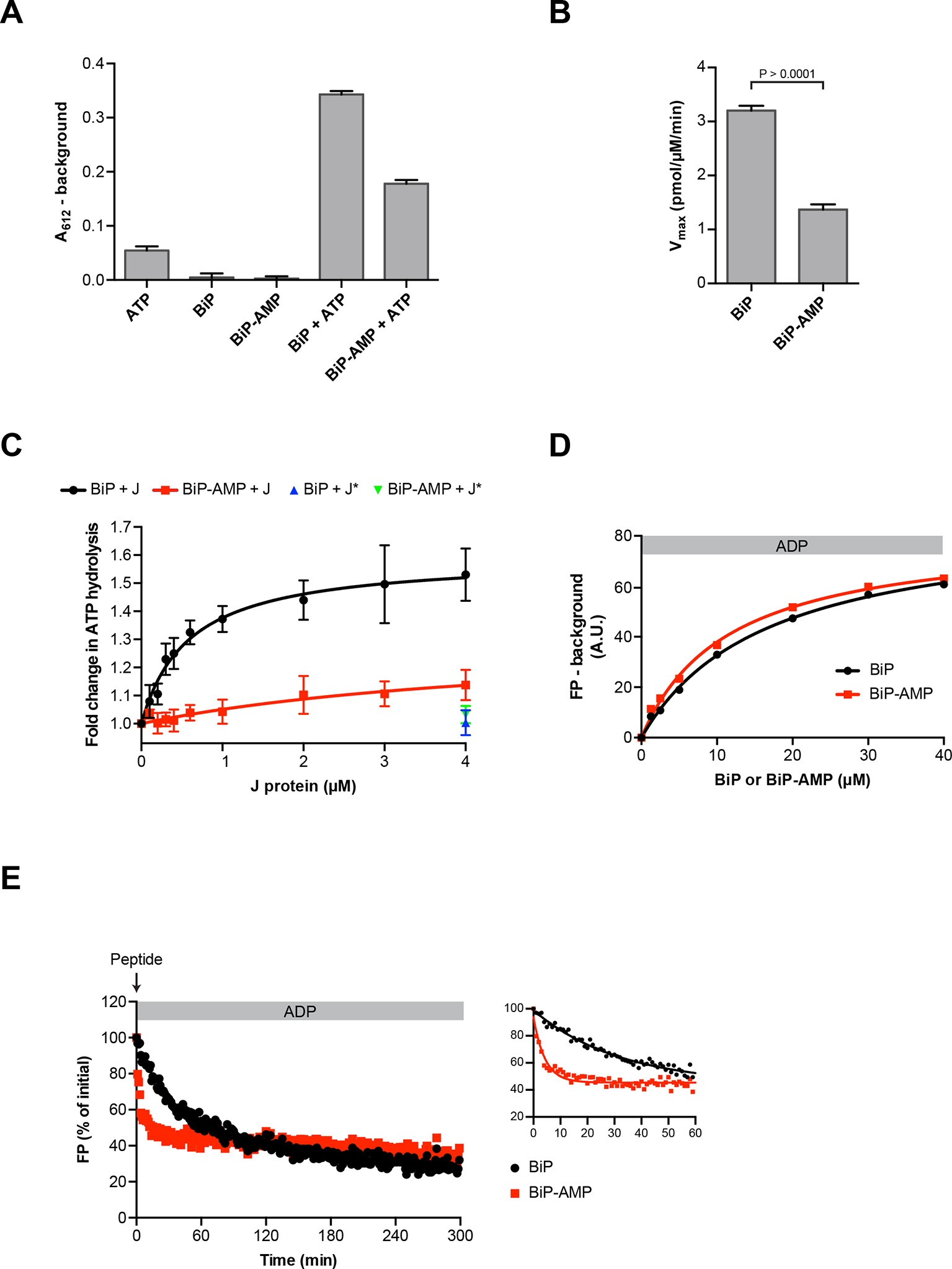 Ampylation Matches Bip Activity To Client Protein Load In