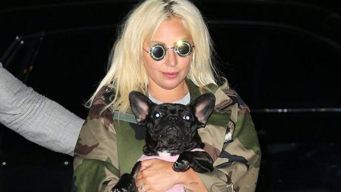 The singer's two dogs were rescued after a violent attack in Los Angeles