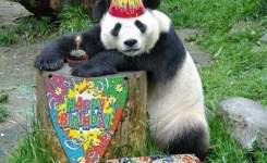 You Party Animal Funny Happy Birthday Meme