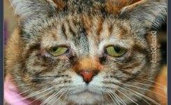 Ktawa.com Foto gambar meme lucu bikin ngakak untuk whatsapp. Setiap ban nginjek sesuatau yang bau pasti nyalahin tai gue kata kucing