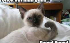 Funny Cats With Wordsmost