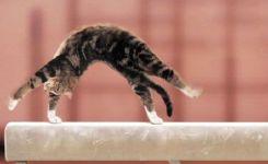 Dog Doing Gymnastics Cat Gymnastics They Always Manage To Stick The Landing