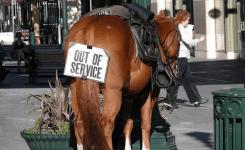 horse-racing-jokes