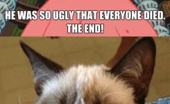 Tard The Grumpy Cat No Tard The Grumpy Cat Memes