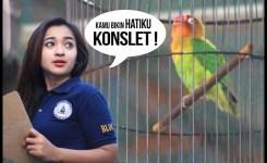 Ndy Watch Curahan Hati Cewey Ngidam Lovebird Konslet Aksi Freety Di Piala Raja  You