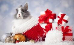 Funny Bunny And Christmas Background Stock P O