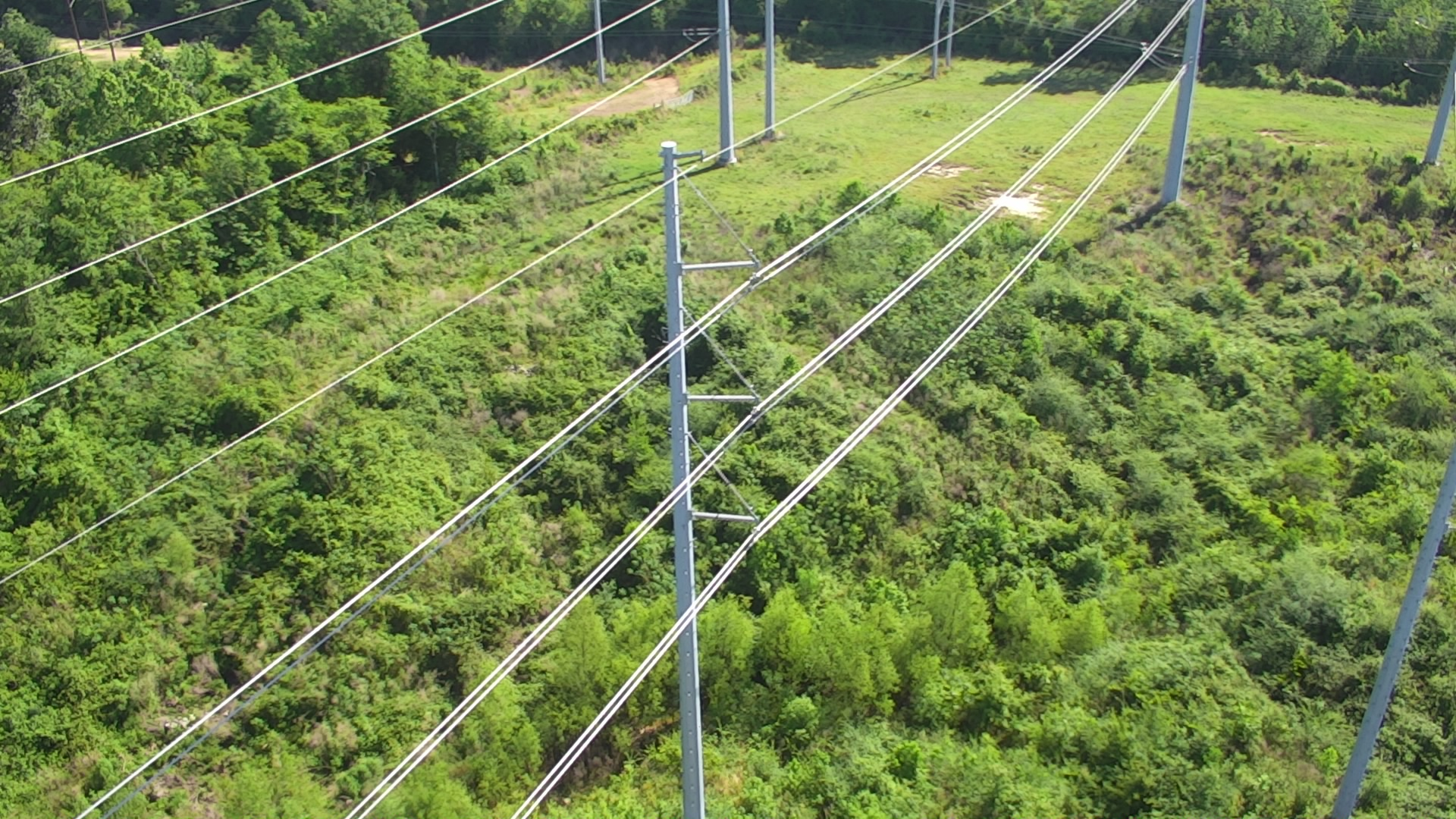 Entergy Named 2020 Tree Line Usa Utility By Arbor Day Foundation