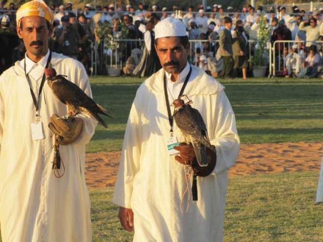Falconry Tunisia