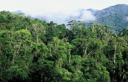Atsinanana Rain Forests
