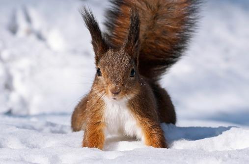Tiere Im Winter Wer Hlt Winterschlaf Wer Nicht