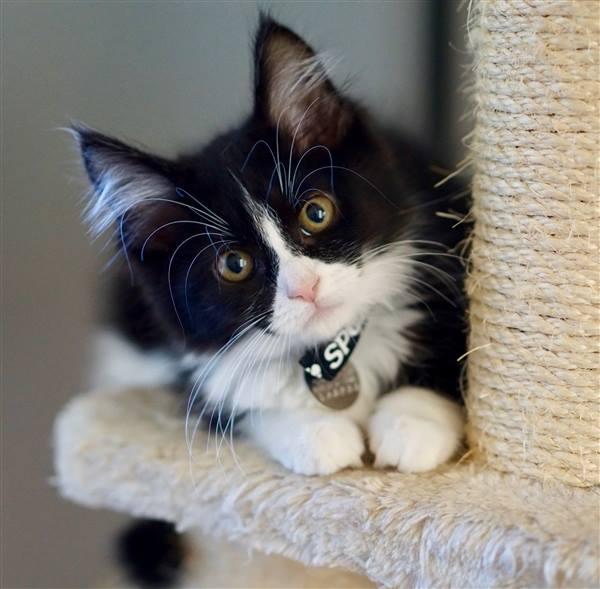 free cat sudbury ontario # 49
