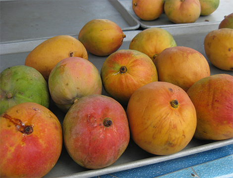 mango 1 The Most Expensive Fruits in the World