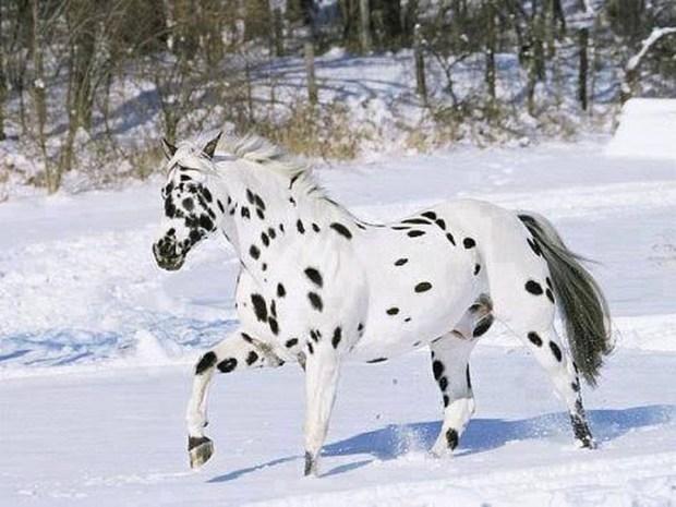 животные, лошадь
