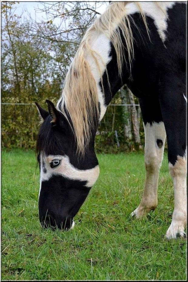 Лошадь в маске животные, лошадь