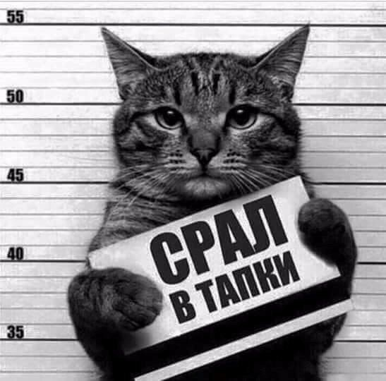 Фото приколы со смешными котами и кошками / Surfingbird ...