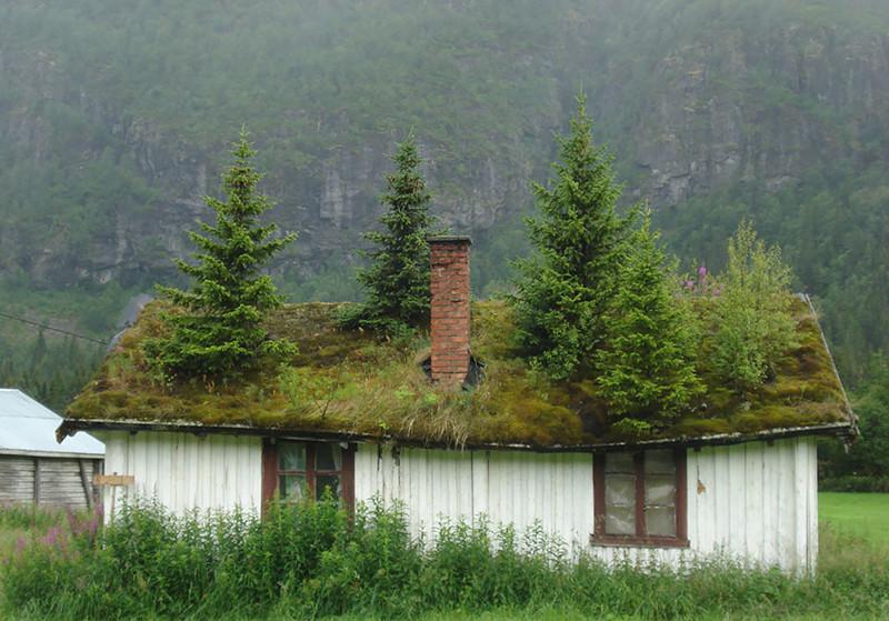 Норвегия  дом, крыша, озеленение, скандинавия