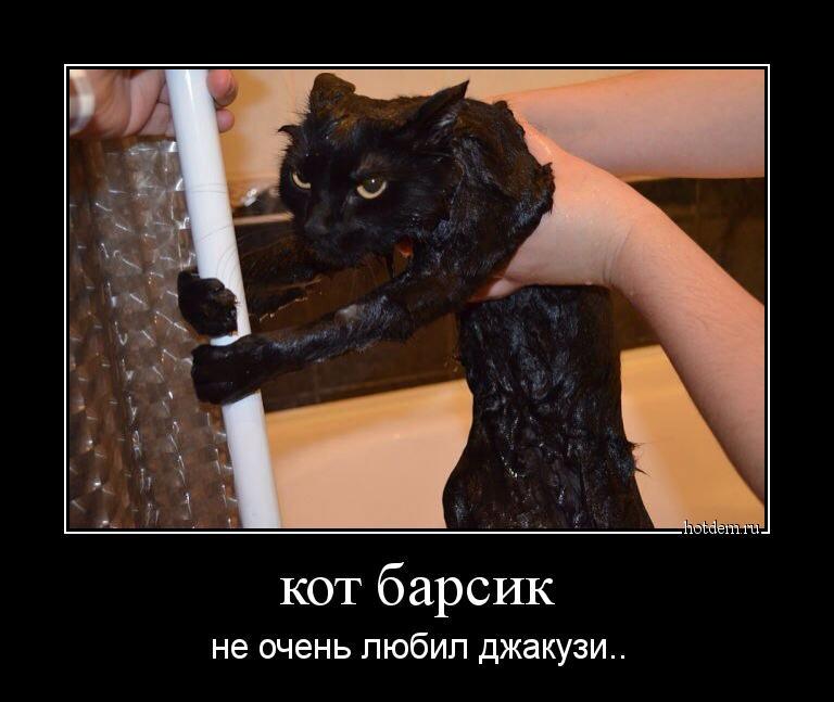 Прикольные коты демотиваторы, животные