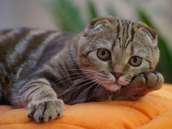 Позитив. Профессиональные фото кошек и котят