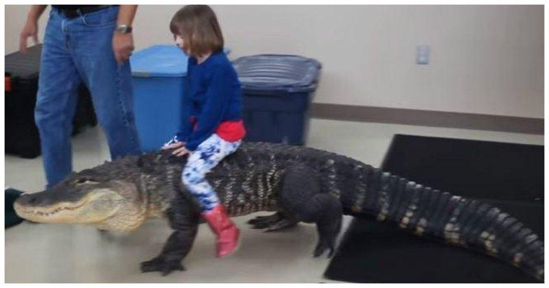 Катание маленькой девочки на 2-метровом аллигаторе возмутило Интернет-сообщество аллигатор, видео, хищник