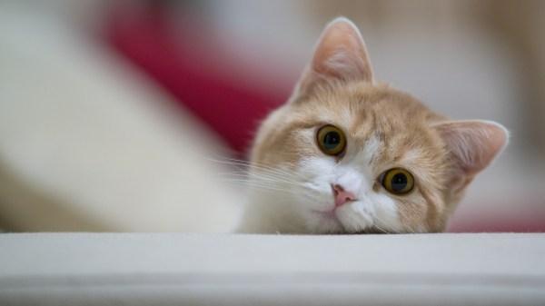 Смешные картинки кошек22 фото