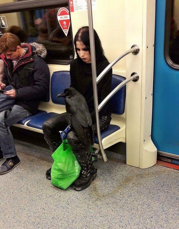 Просто девушка и ее ворон  люди, метро, мир, подземка, прикол, фото, фрик, юмор