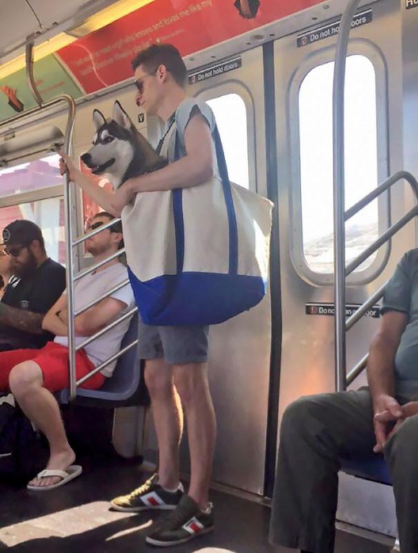 В метро Нью-Йорка можно возить собак только в сумках люди, метро, мир, подземка, прикол, фото, фрик, юмор