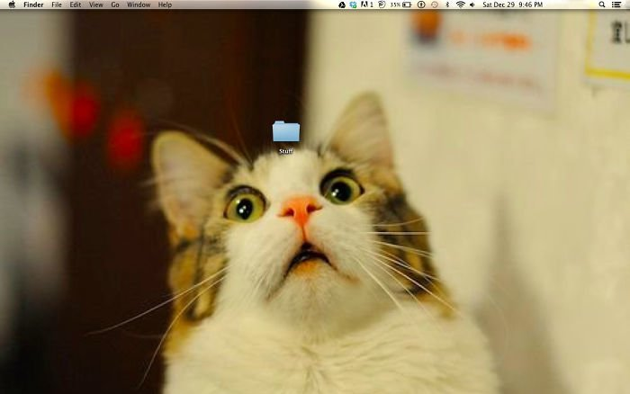 Кот и папка  заставка, идея, монитор, обои, подборка, рабочий стол, фон, фотография