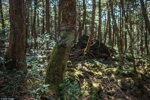 В мрачных глубинах японского леса самоубийц