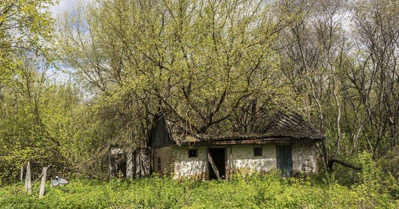 РПЦ предложила план восстановления заброшенных поселений ynews, восстановление, заброшенная деревня, новости, план, рпц, храм