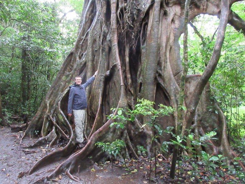 Дерево с гигантскими корнями джунгли, дикие животные, животные, интересно, неизведанное, природа, фото, южная америка