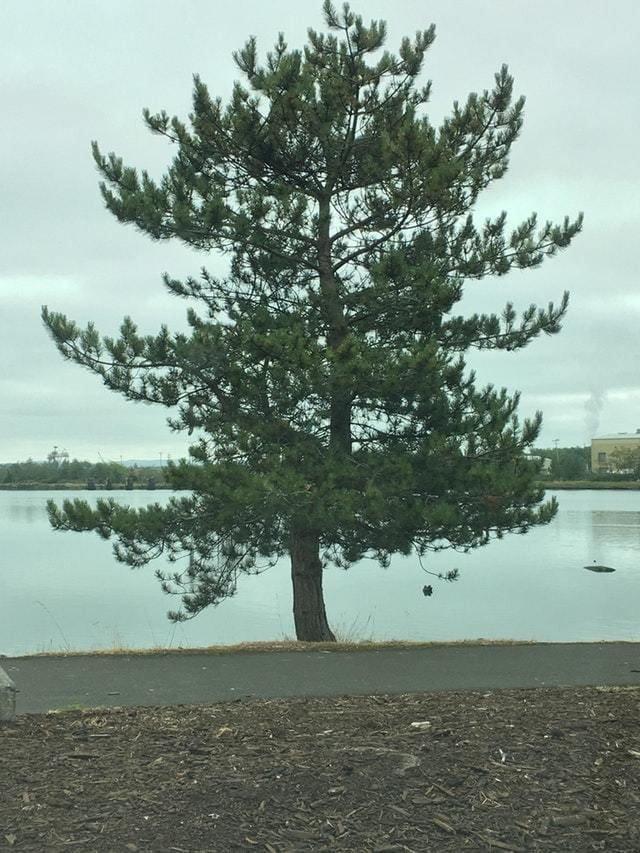 9. Чтобы понять, что с этим деревом всё в порядке, нужно хорошенько присмотреться в мире, познавательно, удивительно, фото, фотомир