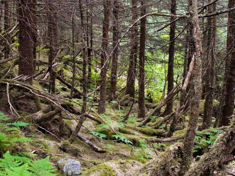 «Дышащая» земля в канадском лесу смутила интернет Лем, в мире, дыхание, земля, природа, удивительно
