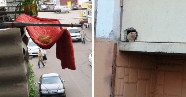 Кот + балкон